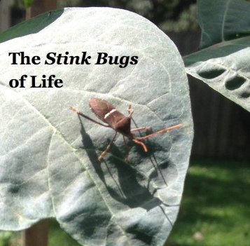 stink-bugs-of-life