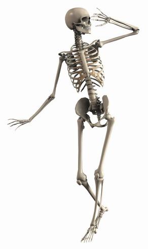 skeleton-2504343_960_720
