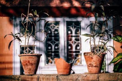 plant-2591576_1920