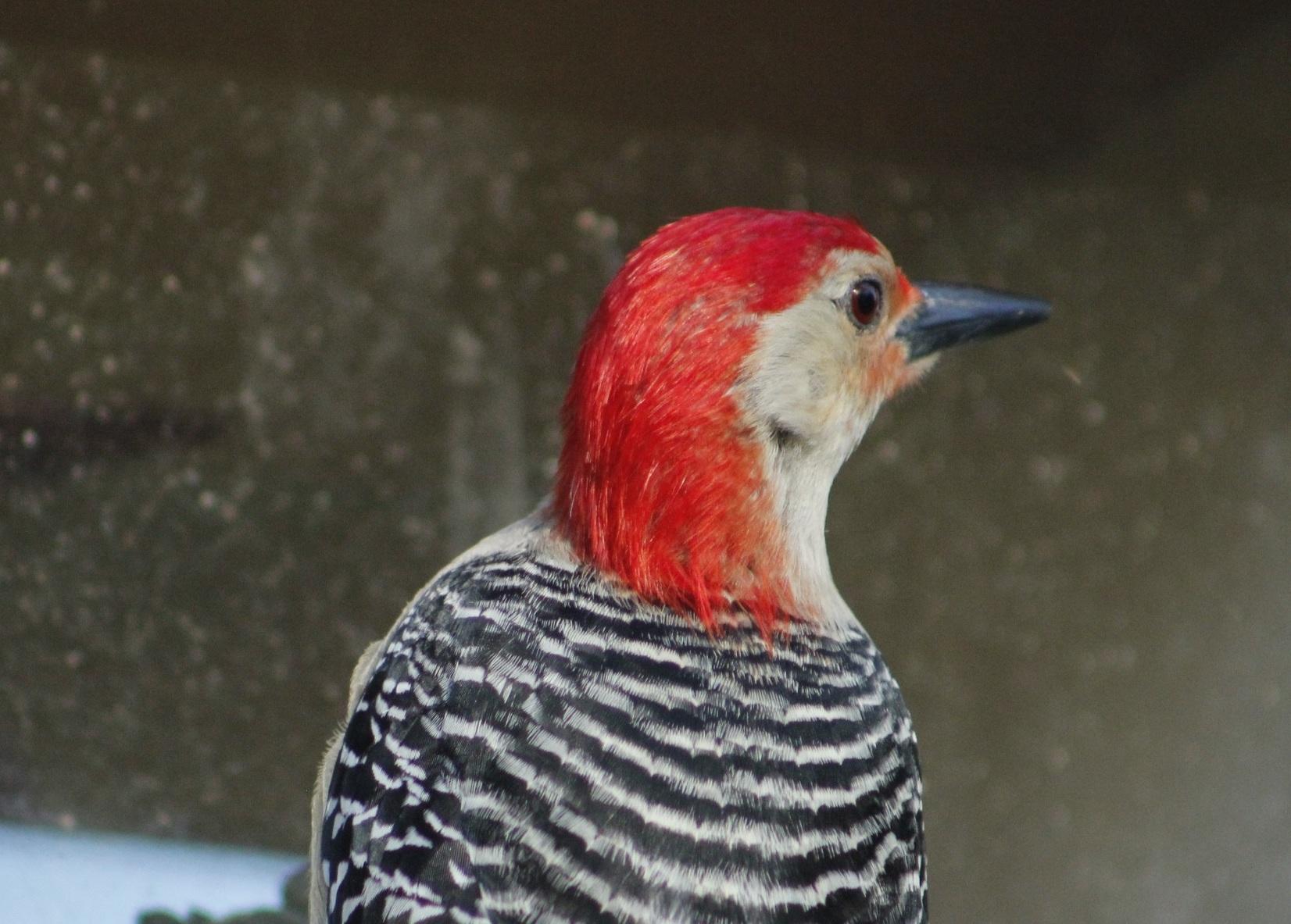bird-3293022.jpg