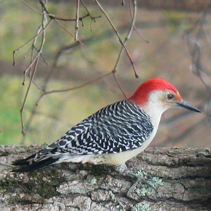 bird-570692_1280.jpg
