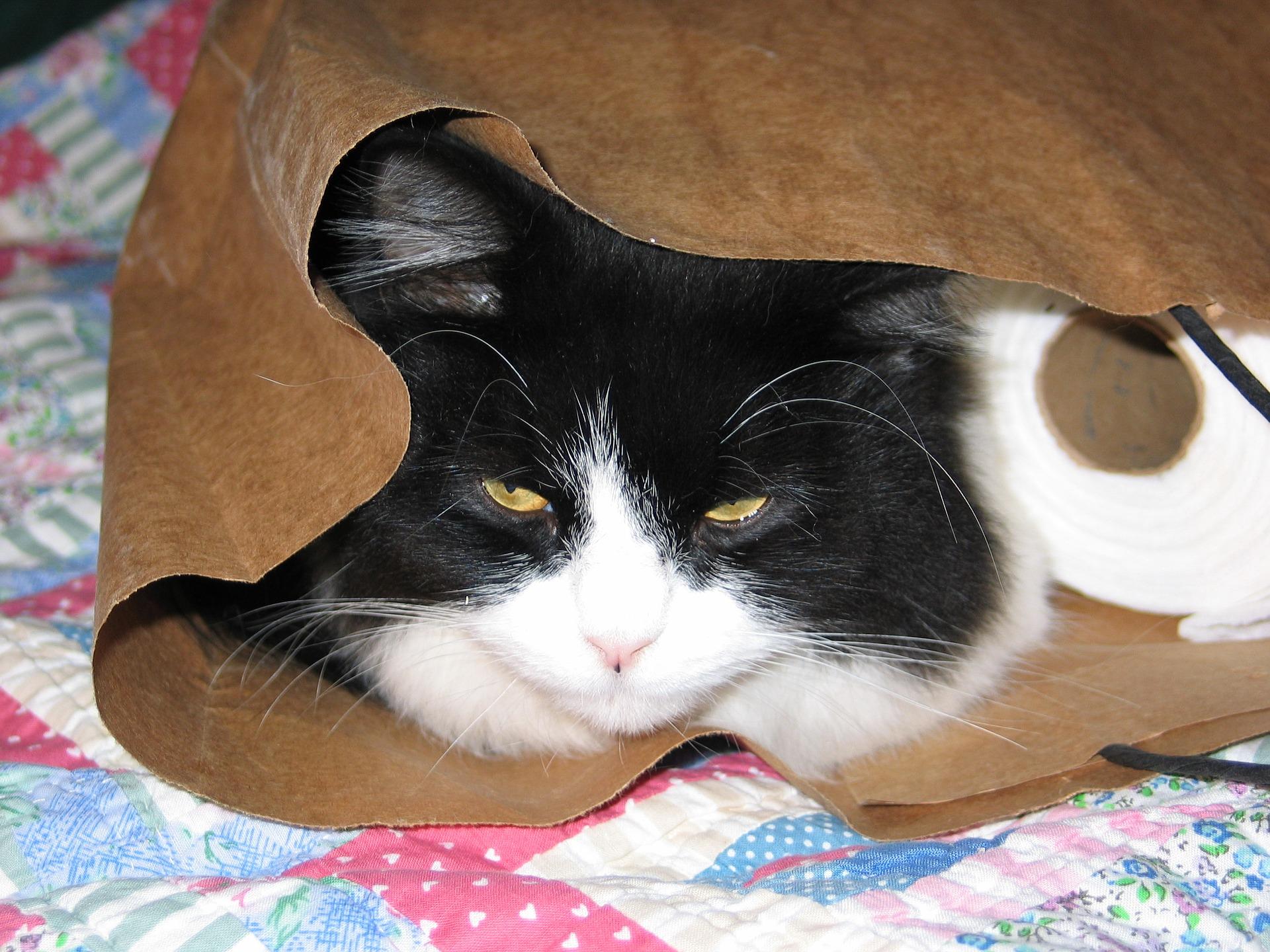 cat-1816646_1920.jpg